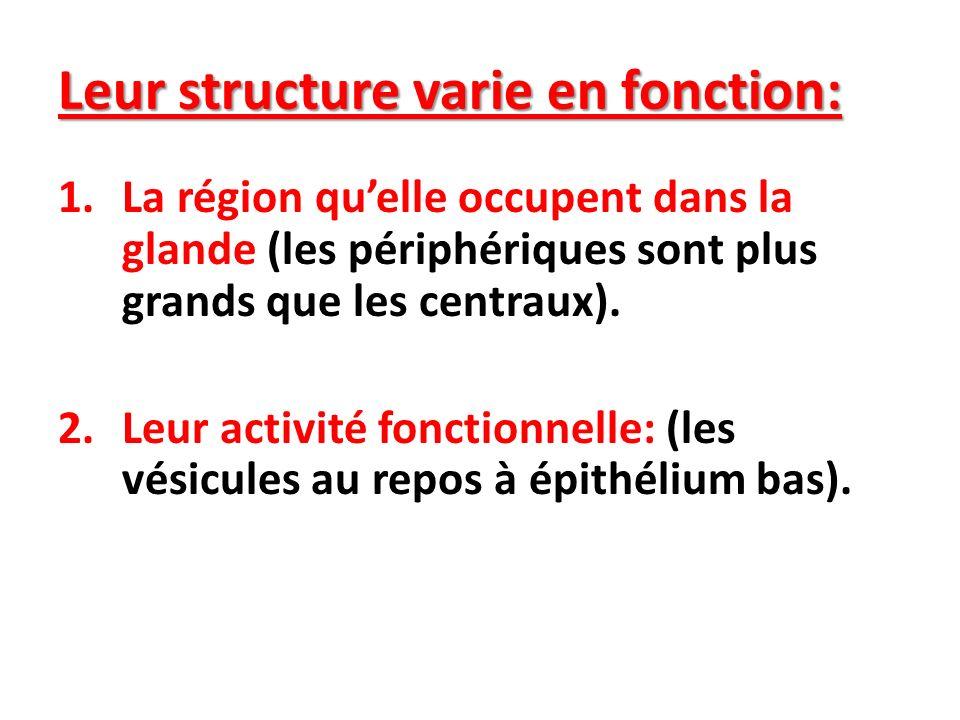 Leur structure varie en fonction: 1.La région quelle occupent dans la glande (les périphériques sont plus grands que les centraux). 2.Leur activité fo