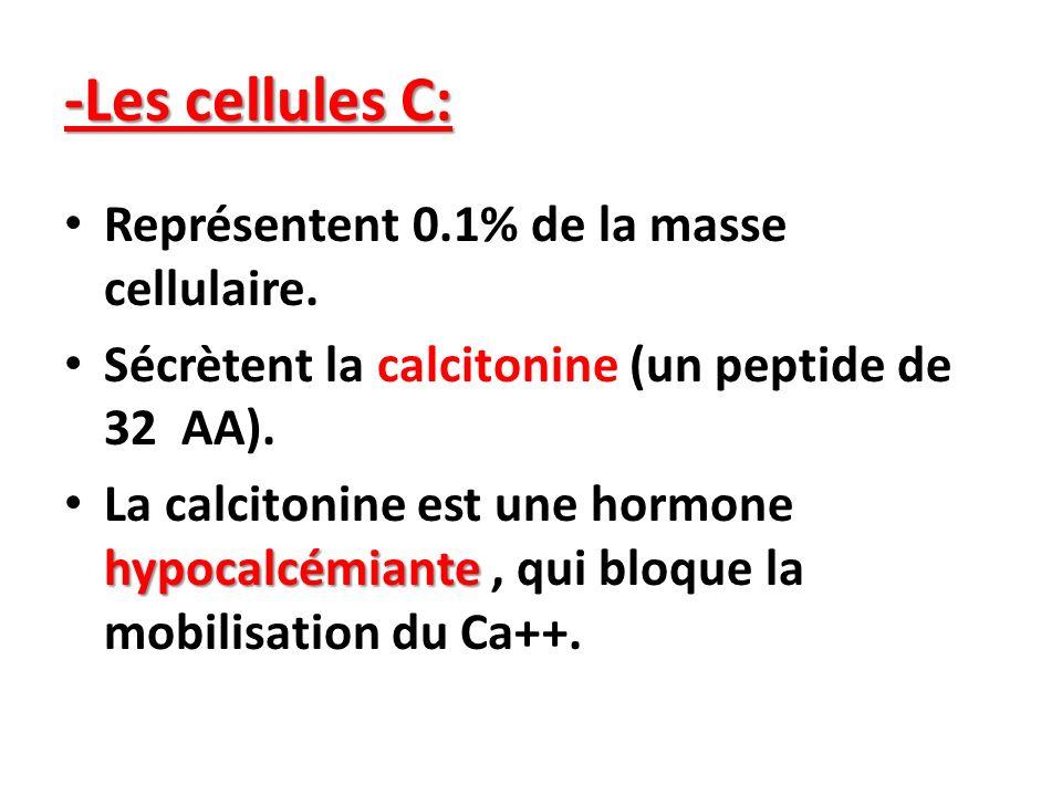 -Les cellules C: Représentent 0.1% de la masse cellulaire. Sécrètent la calcitonine (un peptide de 32 AA). hypocalcémiante La calcitonine est une horm