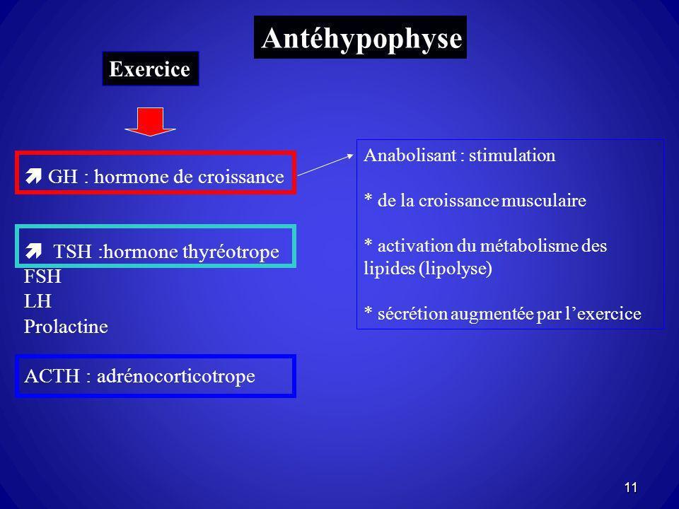 Antéhypophyse GH : hormone de croissance TSH :hormone thyréotrope FSH LH Prolactine ACTH : adrénocorticotrope Anabolisant : stimulation * de la croiss