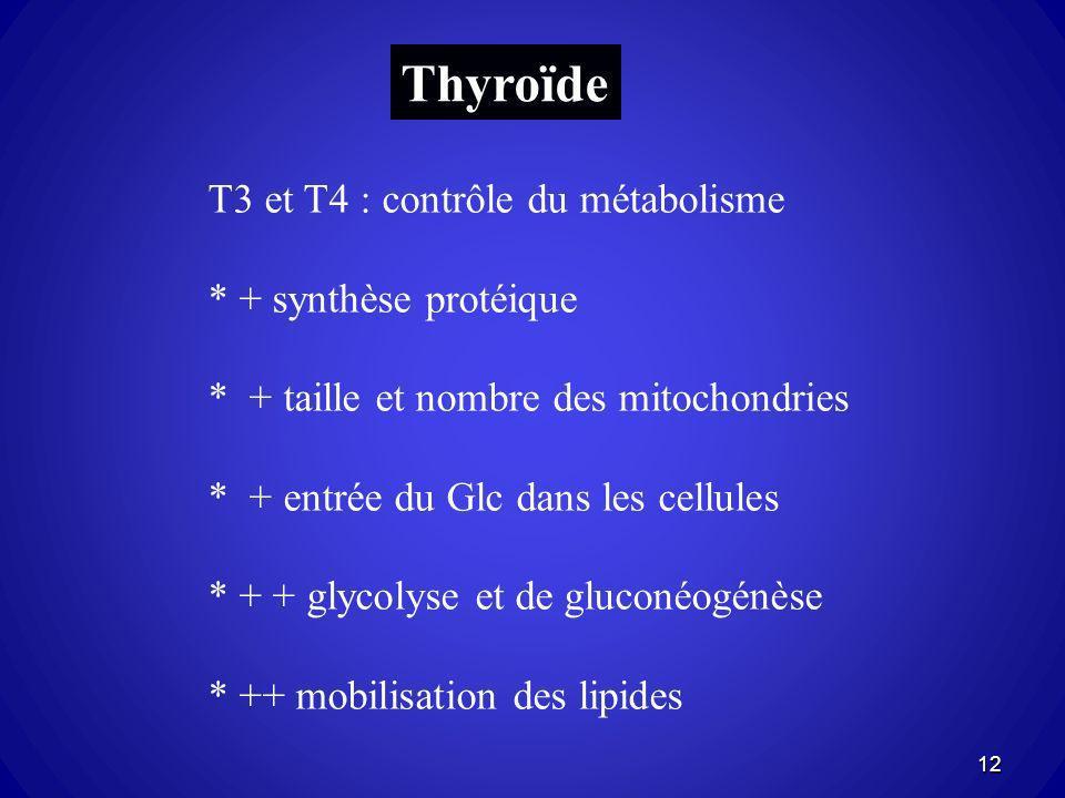 Thyroïde T3 et T4 : contrôle du métabolisme * + synthèse protéique * + taille et nombre des mitochondries * + entrée du Glc dans les cellules * + + gl