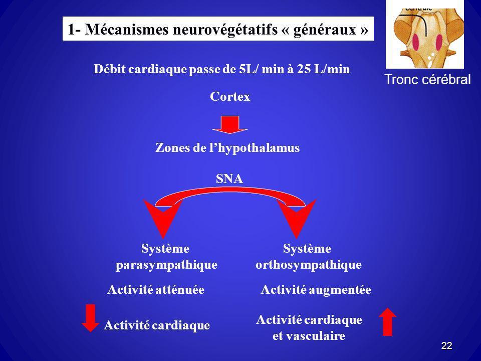 1- Mécanismes neurovégétatifs « généraux » Débit cardiaque passe de 5L/ min à 25 L/min Zones de lhypothalamus Cortex SNA Système parasympathique Systè