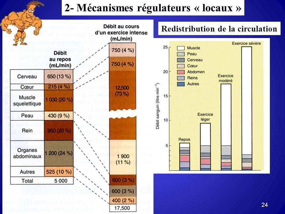 2- Mécanismes régulateurs « locaux » Redistribution de la circulation 24