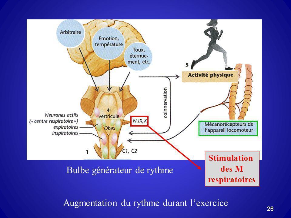 Bulbe générateur de rythme Augmentation du rythme durant lexercice Stimulation des M respiratoires 26