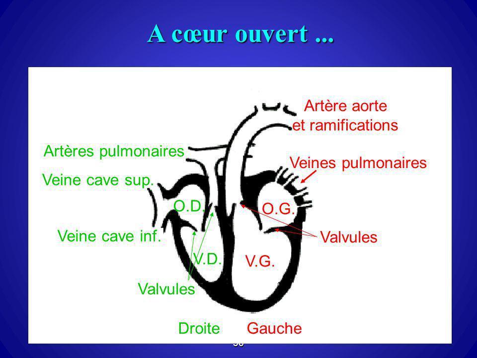 36 A cœur ouvert... le myocarde DroiteGauche O.D. O.G. V.D. V.G. Veine cave sup. Veine cave inf. Veines pulmonaires Artères pulmonaires Artère aorte e