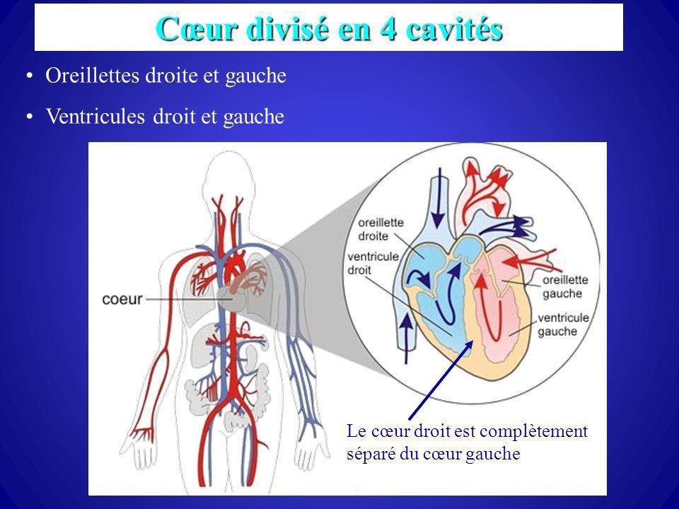 37 Cœur divisé en 4 cavités Oreillettes droite et gauche Ventricules droit et gauche Le cœur droit est complètement séparé du cœur gauche
