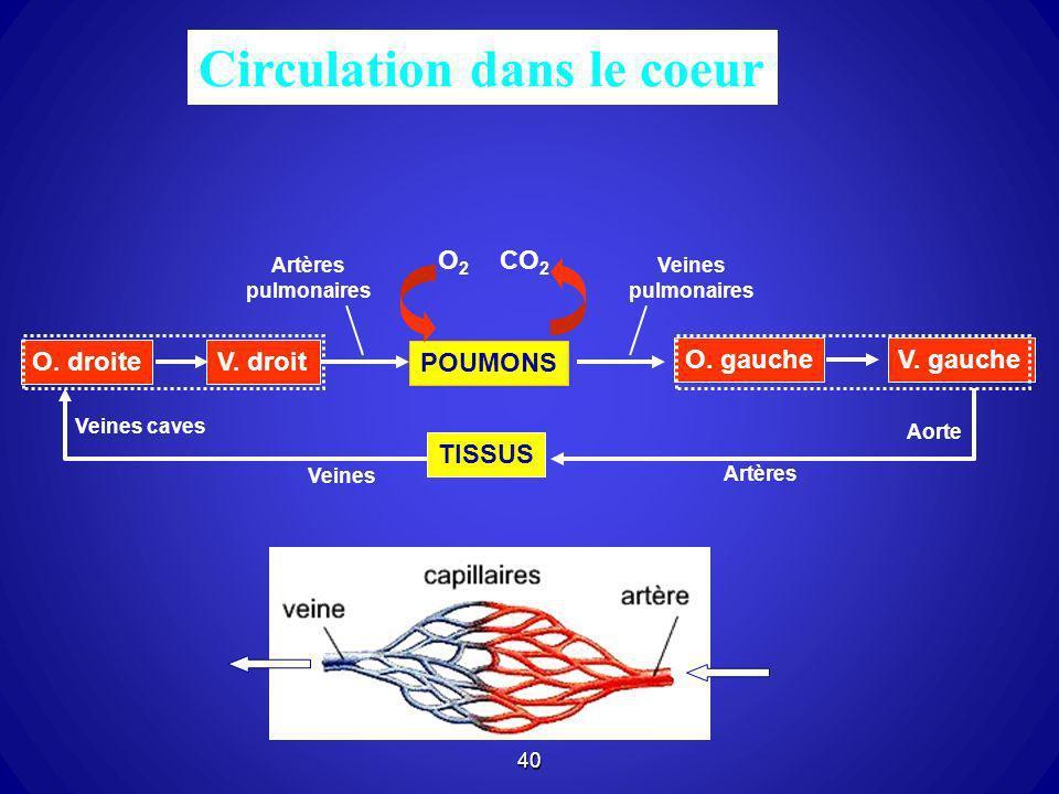 40 Circulation dans le coeur POUMONS O2O2 CO 2 Artères pulmonaires O. gauche V. gauche Veines pulmonaires Aorte Artères O. droiteV. droit TISSUS Veine