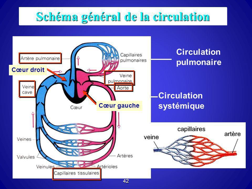 42 Schéma général de la circulation Circulation systémique Circulation pulmonaire Cœur droit Cœur gauche