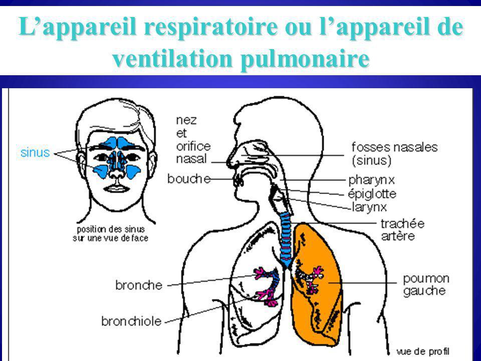 47 Lappareil respiratoire ou lappareil de ventilation pulmonaire