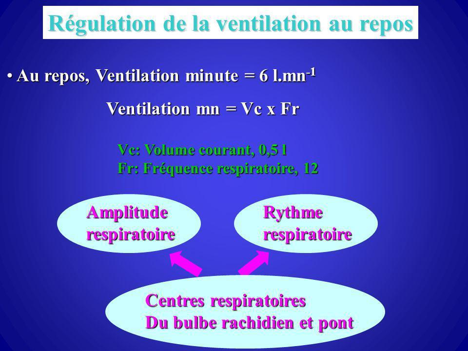 54 Régulation de la ventilation au repos Au repos, Ventilation minute = 6 l.mn -1 Au repos, Ventilation minute = 6 l.mn -1 Ventilation mn = Vc x Fr Vc