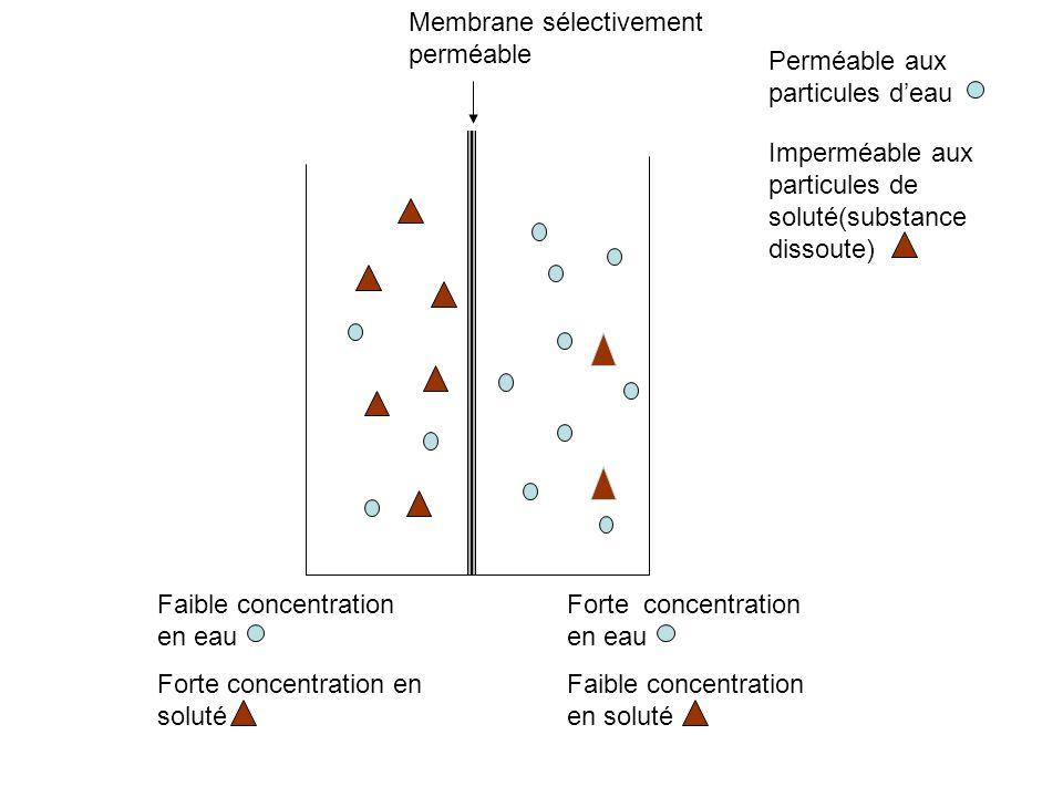 Perméable aux particules deau Imperméable aux particules de soluté(substance dissoute) Membrane sélectivement perméable Faible concentration en eau Fo