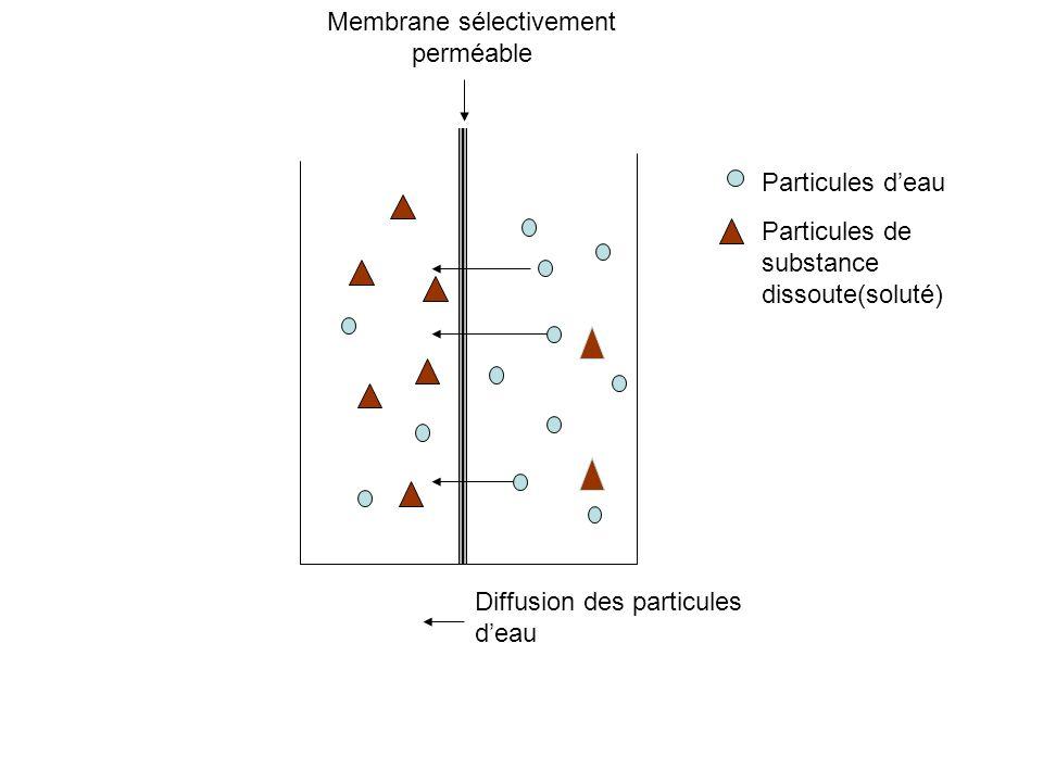 Particules deau Particules de substance dissoute(soluté) Membrane sélectivement perméable Diffusion des particules deau