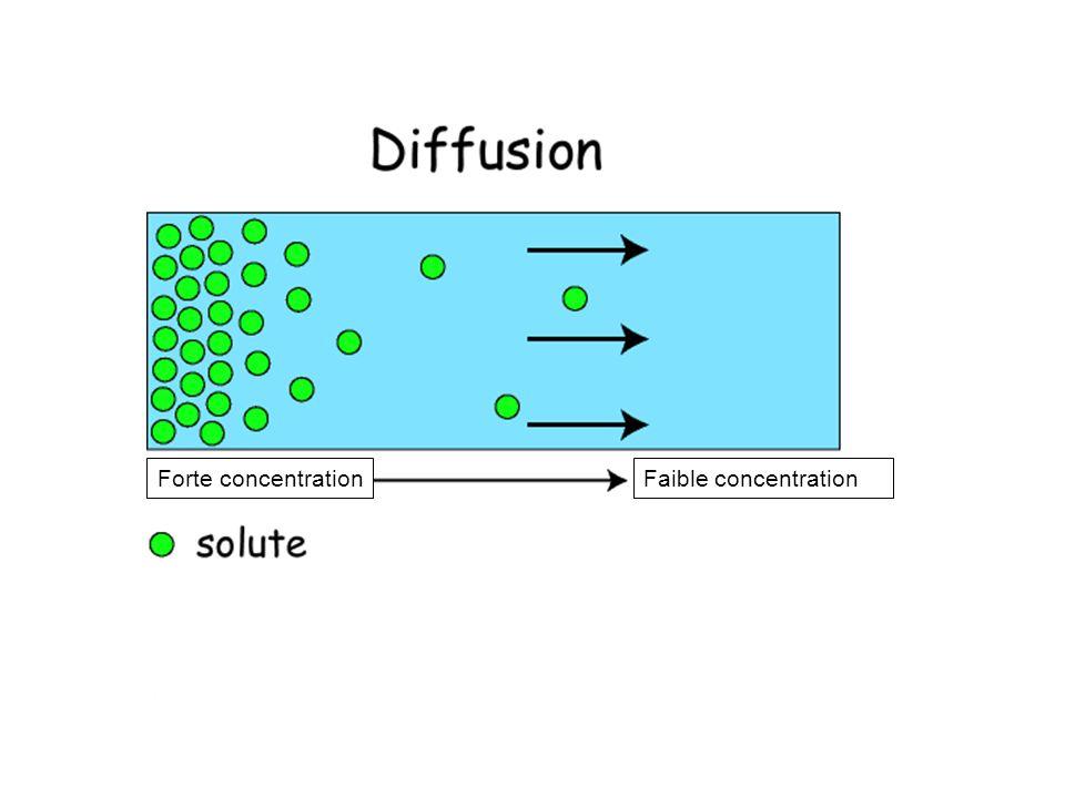 Forte concentrationFaible concentration