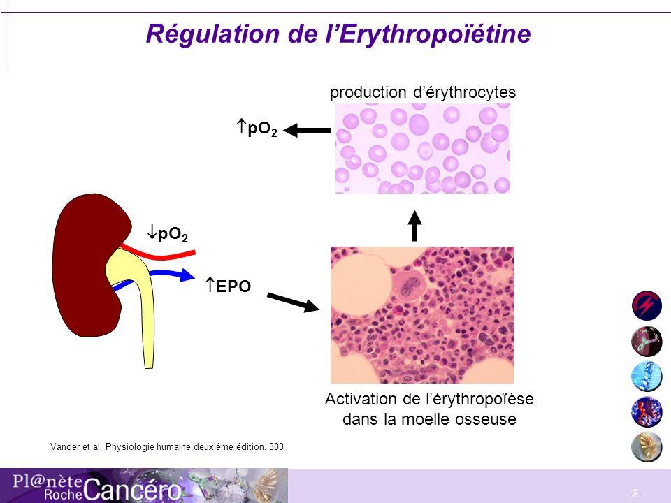 -2- Régulation de lErythropoïétine pO 2 EPO Moelle osseuse Activation de lérythropoïèse dans la moelle osseuse production dérythrocytes pO 2 Vander et