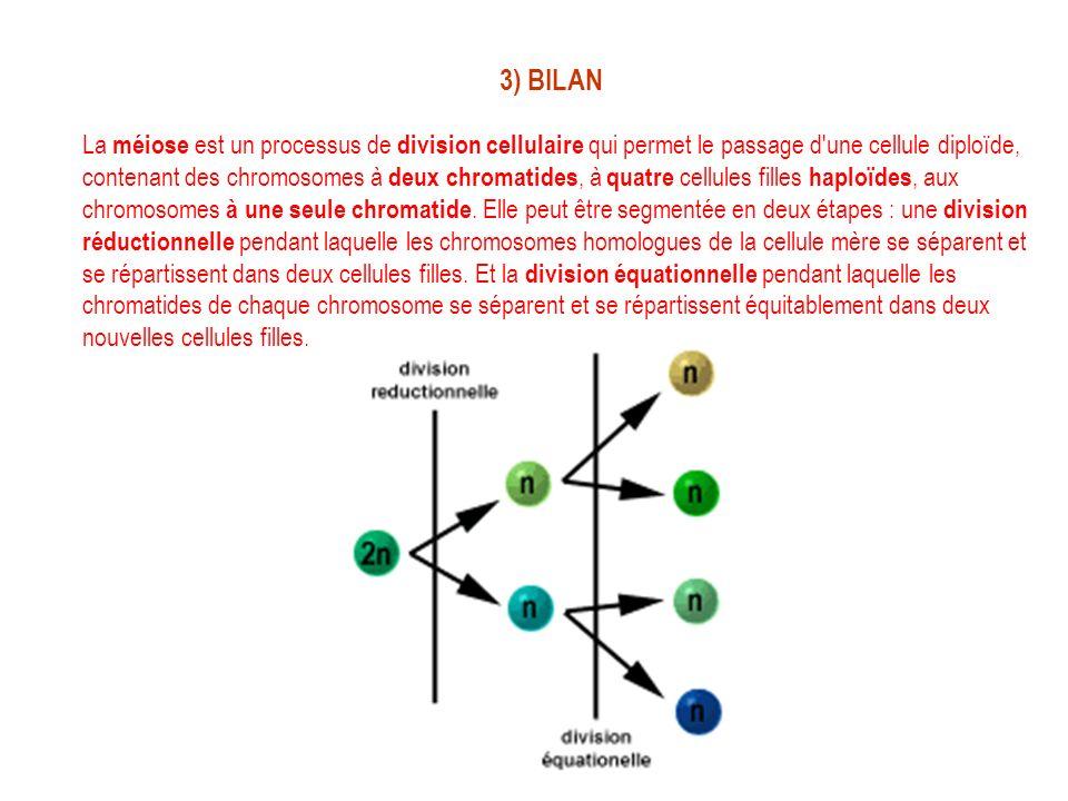 3) BILAN La méiose est un processus de division cellulaire qui permet le passage d'une cellule diploïde, contenant des chromosomes à deux chromatides,