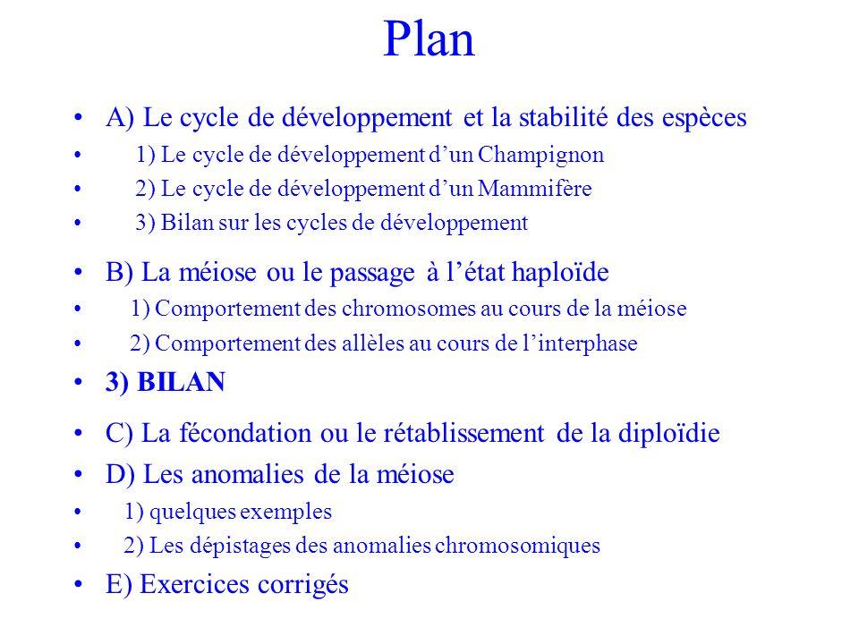 Plan A) Le cycle de développement et la stabilité des espèces 1) Le cycle de développement dun Champignon 2) Le cycle de développement dun Mammifère 3