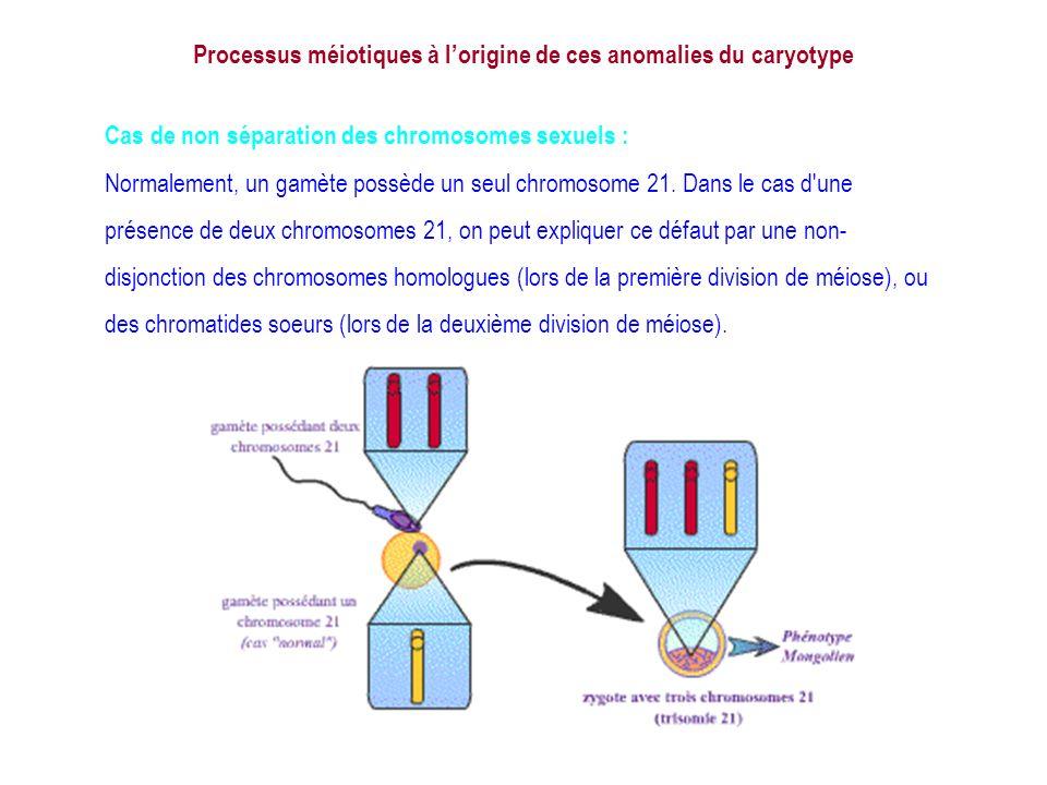 Lors de la méiose, il peut arriver que les chromosomes sexuels ne se séparent pas. Les deux chromosomes sexuels migrent dans le même gamète. Processus