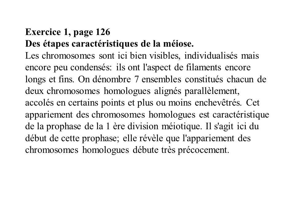 Exercice 1, page 126 Des étapes caractéristiques de la méiose. Les chromosomes sont ici bien visibles, individualisés mais encore peu condensés: ils o