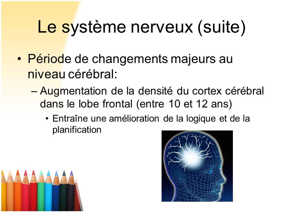 Le système nerveux (suite) Période de changements majeurs au niveau cérébral: –Augmentation de la densité du cortex cérébral dans le lobe frontal (ent