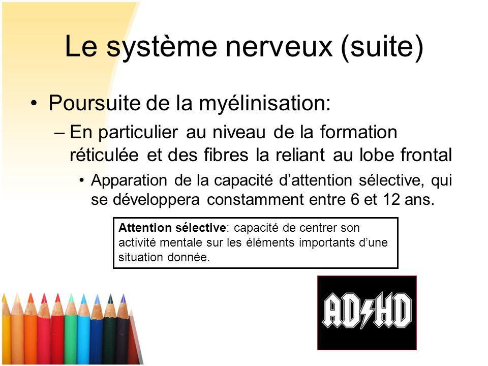 Poursuite de la myélinisation: –En particulier au niveau de la formation réticulée et des fibres la reliant au lobe frontal Apparation de la capacité