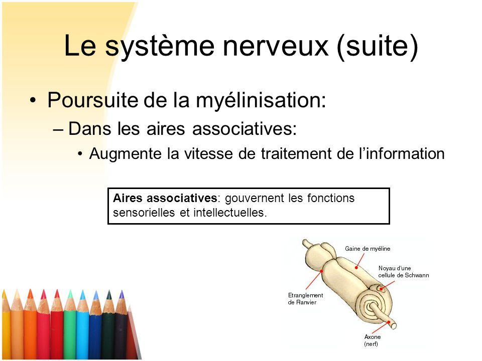 Le système nerveux (suite) Poursuite de la myélinisation: –Dans les aires associatives: Augmente la vitesse de traitement de linformation Aires associ