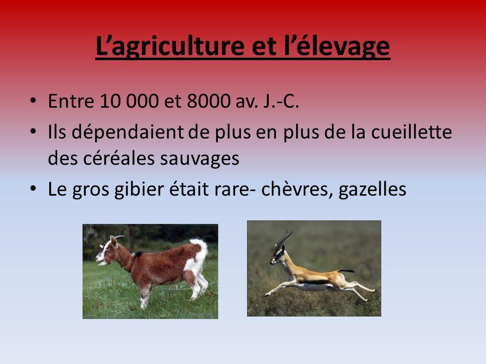 Lagriculture et lélevage Entre 10 000 et 8000 av. J.-C. Ils dépendaient de plus en plus de la cueillette des céréales sauvages Le gros gibier était ra
