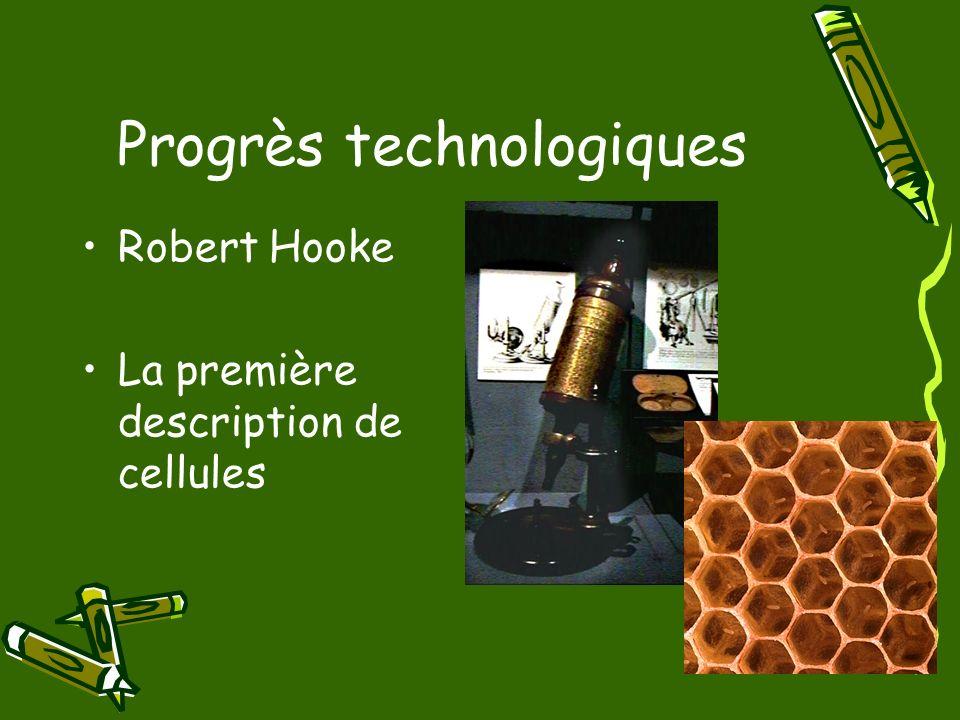 Progrès technologiques Robert Hooke La première description de cellules