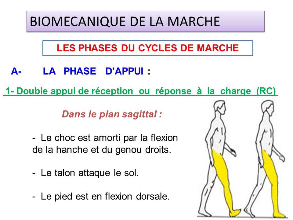 1- Double appui de réception ou réponse à la charge (RC) Dans le plan sagittal : - Le choc est amorti par la flexion de la hanche et du genou droits.