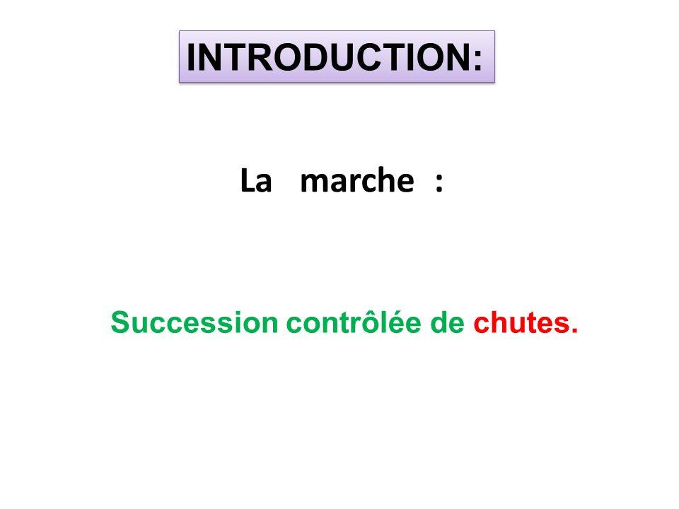 Dans le plan sagittal: LES PHASES DU CYCLES DE MARCHE BIOMECANIQUE DE LA MARCHE B- LA PHASE D OSCILLATION