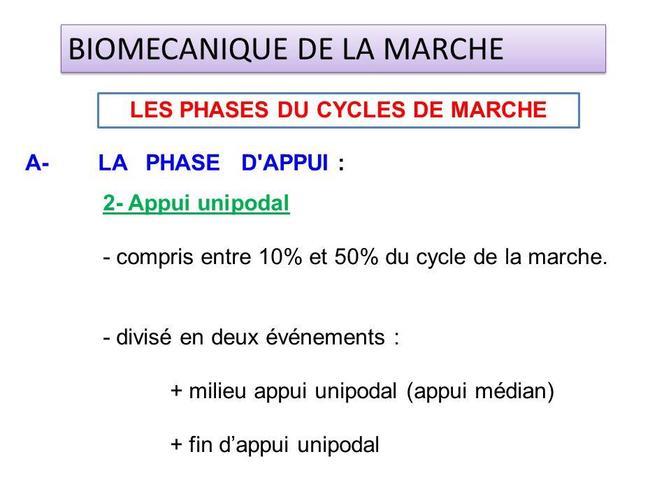 2- Appui unipodal - compris entre 10% et 50% du cycle de la marche. - divisé en deux événements : + milieu appui unipodal (appui médian) + fin dappui