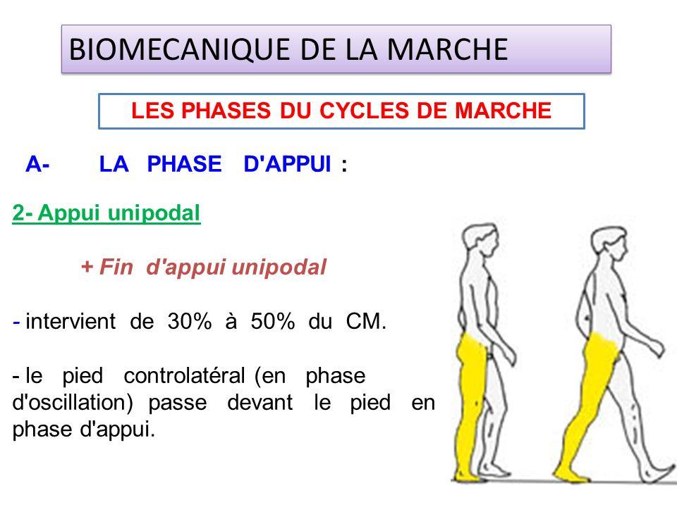 2- Appui unipodal + Fin d'appui unipodal - intervient de 30% à 50% du CM. - le pied controlatéral (en phase d'oscillation) passe devant le pied en pha
