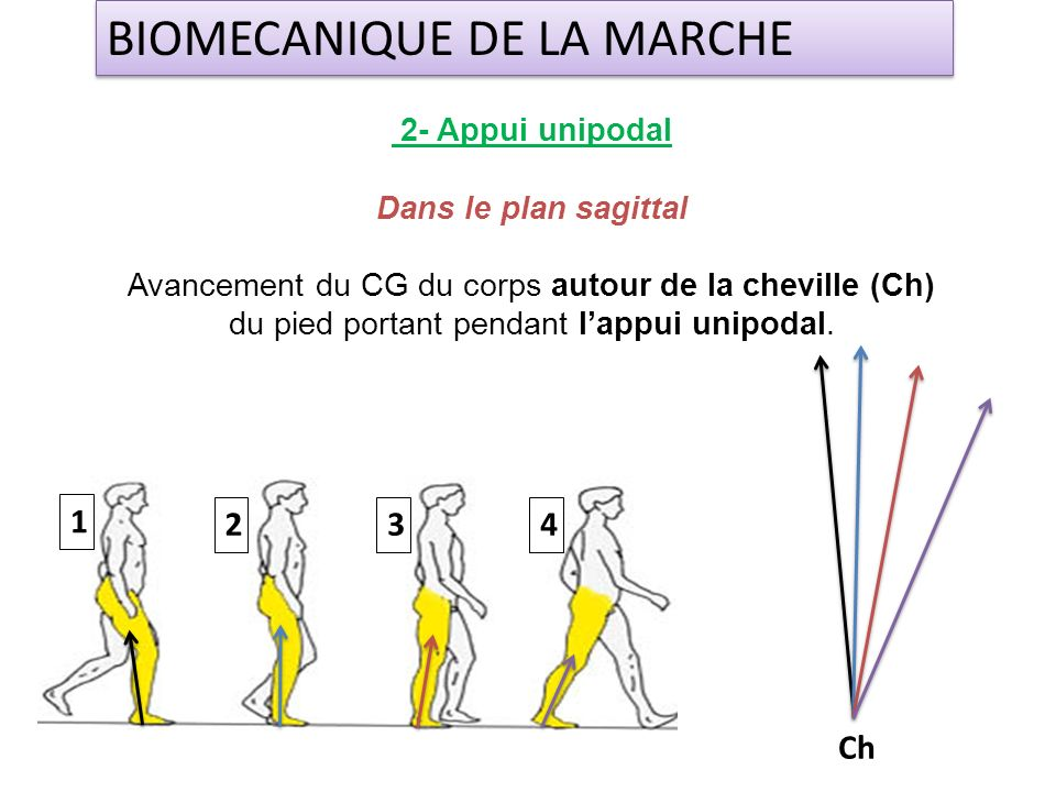 2- Appui unipodal Dans le plan sagittal Avancement du CG du corps autour de la cheville (Ch) du pied portant pendant lappui unipodal. BIOMECANIQUE DE