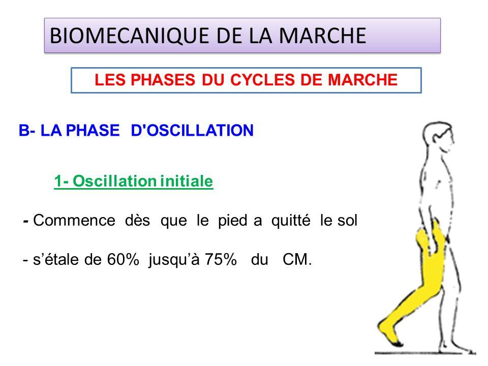 1- Oscillation initiale - Commence dès que le pied a quitté le sol - sétale de 60% jusquà 75% du CM. LES PHASES DU CYCLES DE MARCHE BIOMECANIQUE DE LA