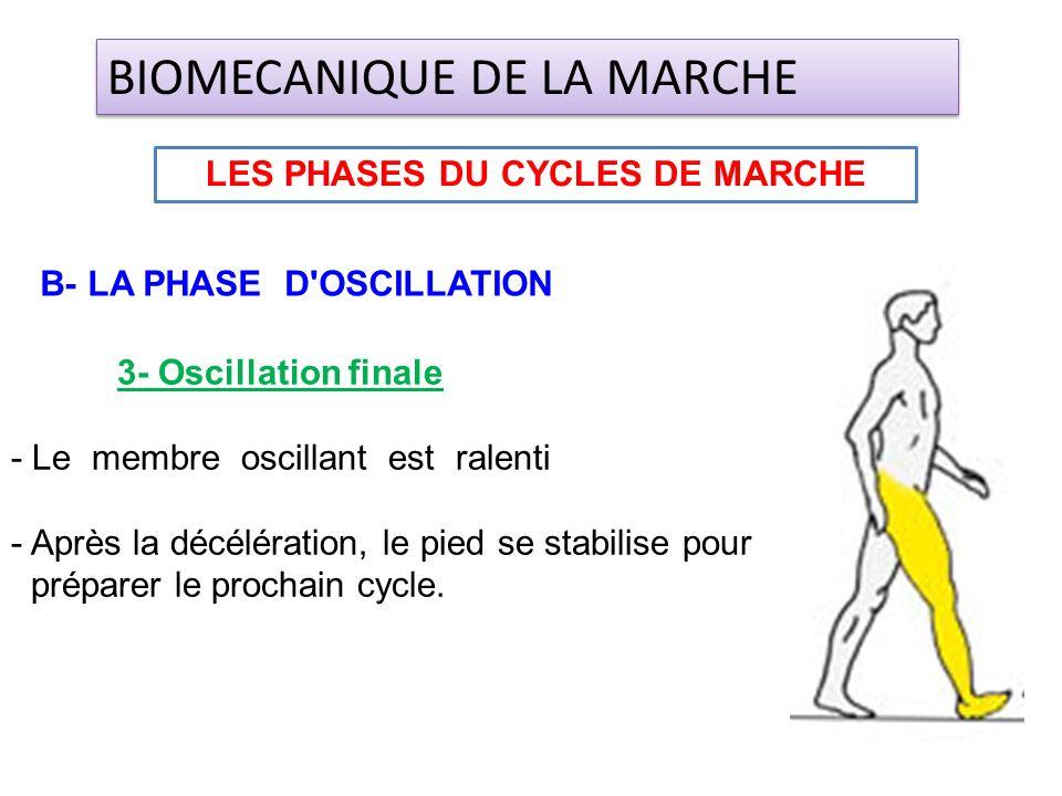 3- Oscillation finale - Le membre oscillant est ralenti - Après la décélération, le pied se stabilise pour préparer le prochain cycle. LES PHASES DU C