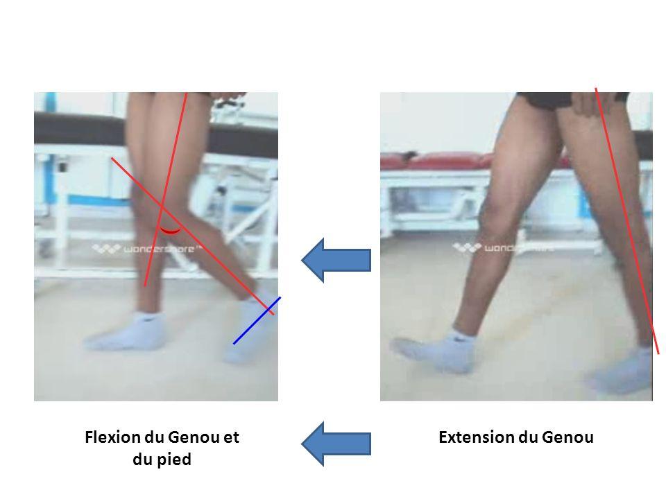 Extension du GenouFlexion du Genou et du pied