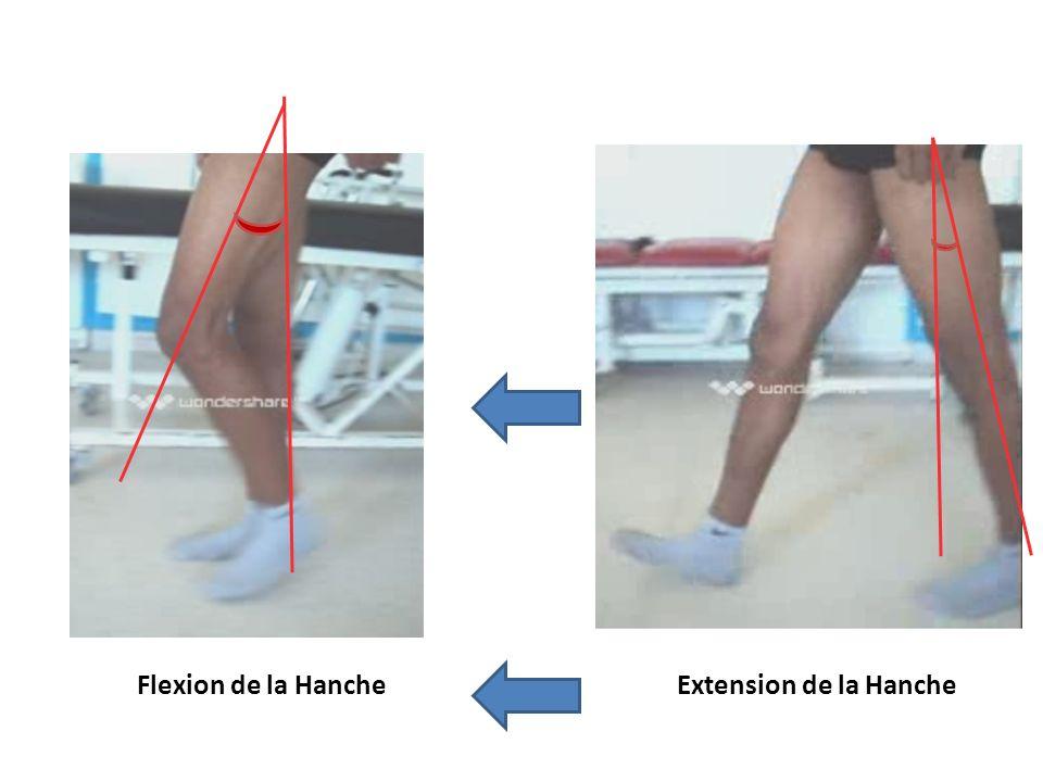 Extension de la HancheFlexion de la Hanche