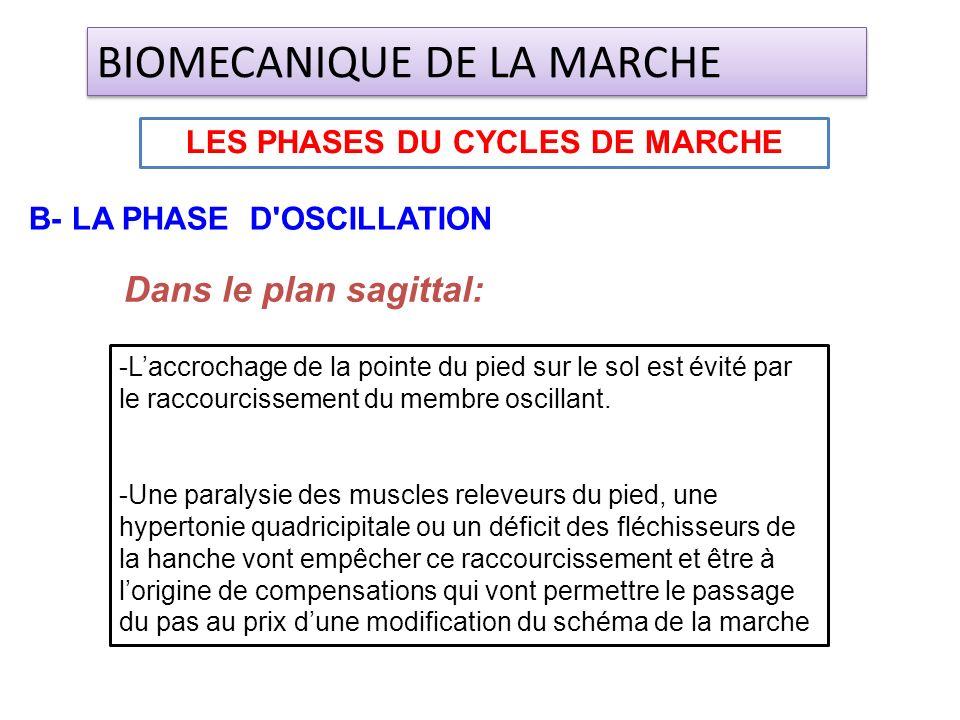 Dans le plan sagittal: LES PHASES DU CYCLES DE MARCHE BIOMECANIQUE DE LA MARCHE B- LA PHASE D'OSCILLATION -Laccrochage de la pointe du pied sur le sol