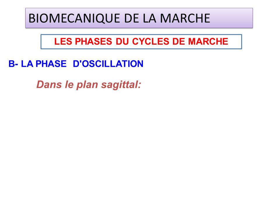 Dans le plan sagittal: LES PHASES DU CYCLES DE MARCHE BIOMECANIQUE DE LA MARCHE B- LA PHASE D'OSCILLATION
