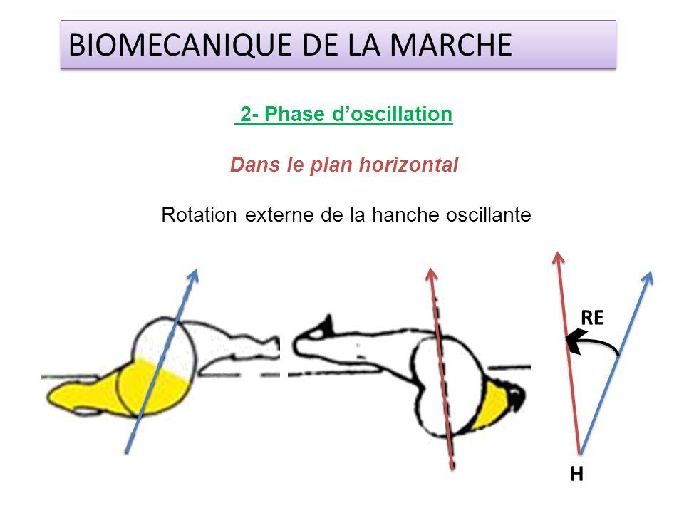 2- Phase doscillation Dans le plan horizontal Rotation externe de la hanche oscillante BIOMECANIQUE DE LA MARCHE H RE