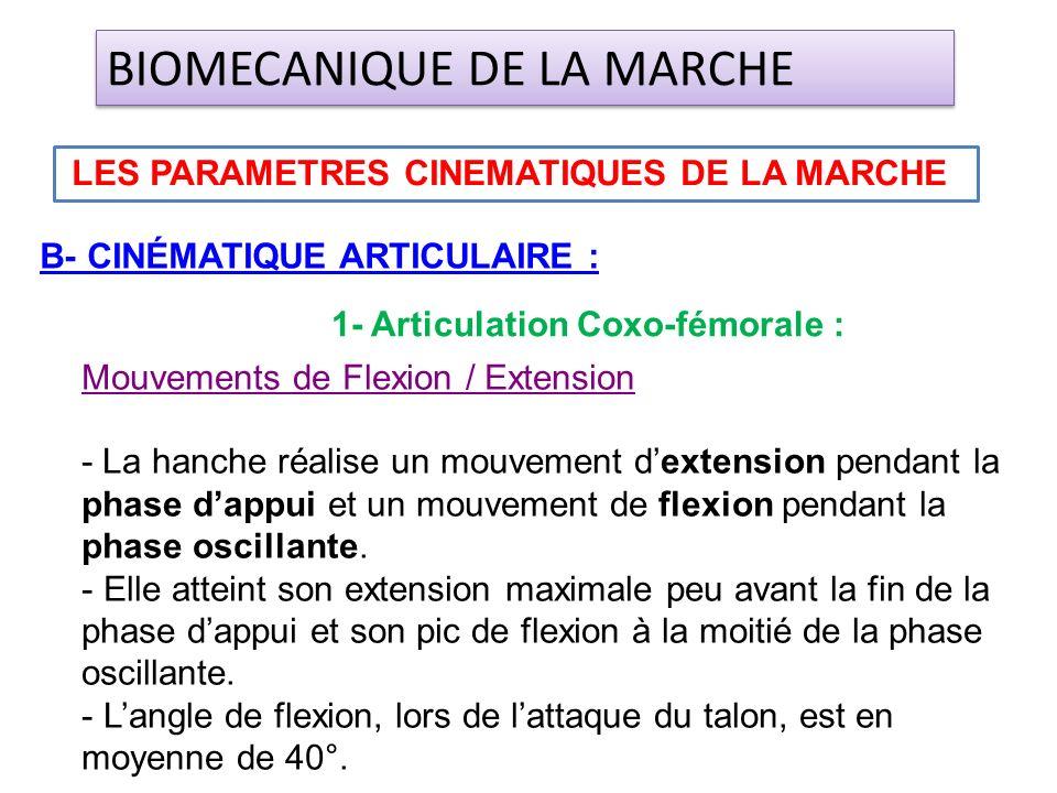B- CINÉMATIQUE ARTICULAIRE : LES PARAMETRES CINEMATIQUES DE LA MARCHE BIOMECANIQUE DE LA MARCHE 1- Articulation Coxo-fémorale : Mouvements de Flexion