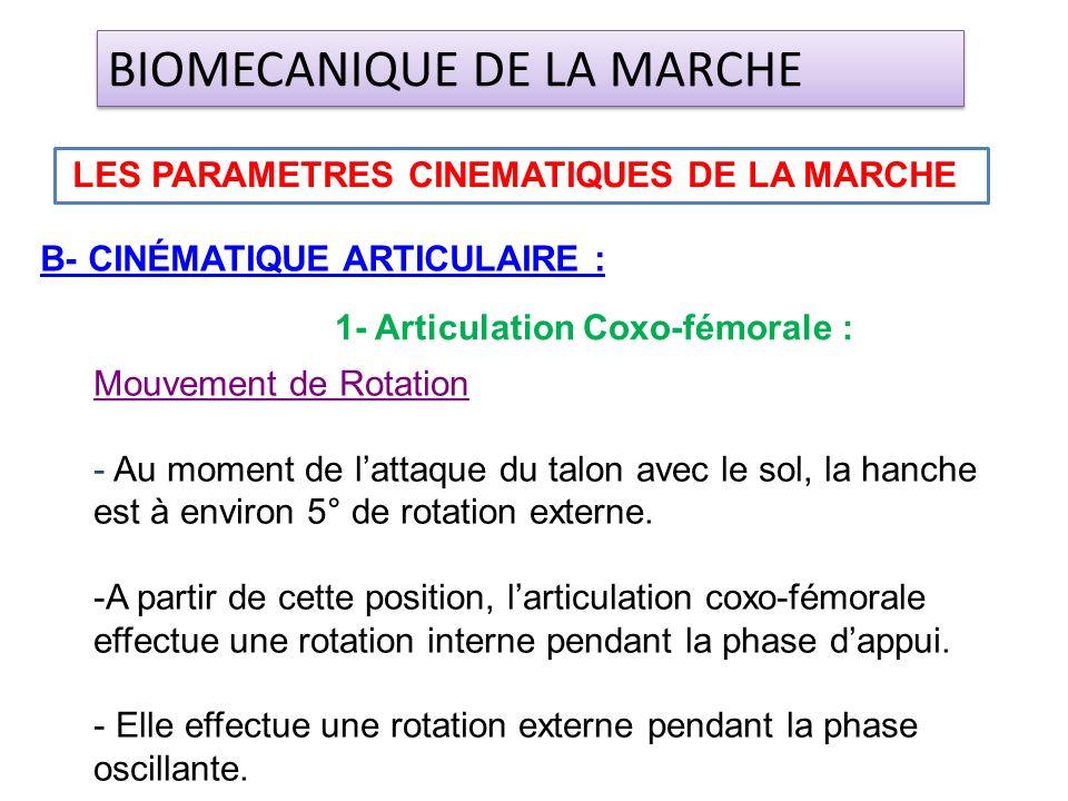 B- CINÉMATIQUE ARTICULAIRE : LES PARAMETRES CINEMATIQUES DE LA MARCHE BIOMECANIQUE DE LA MARCHE 1- Articulation Coxo-fémorale : Mouvement de Rotation