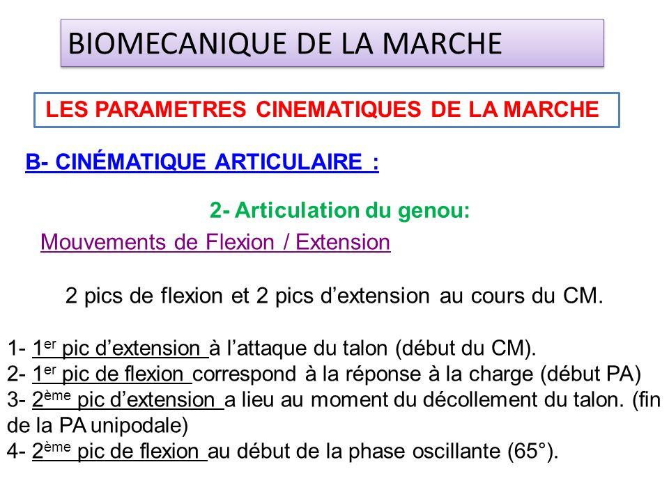 Mouvements de Flexion / Extension 2 pics de flexion et 2 pics dextension au cours du CM. 1- 1 er pic dextension à lattaque du talon (début du CM). 2-