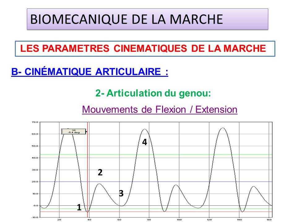 Mouvements de Flexion / Extension B- CINÉMATIQUE ARTICULAIRE : LES PARAMETRES CINEMATIQUES DE LA MARCHE BIOMECANIQUE DE LA MARCHE 2- Articulation du g