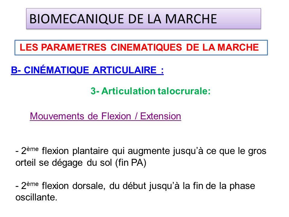 B- CINÉMATIQUE ARTICULAIRE : LES PARAMETRES CINEMATIQUES DE LA MARCHE BIOMECANIQUE DE LA MARCHE 3- Articulation talocrurale: Mouvements de Flexion / E
