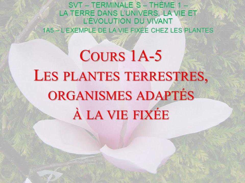 I- Les plantes terrestres, organismes fixés en interface avec leur milieu A- Les relations avec latmosphère Cette première manipulation nous révèle lexistence de pores dans lépiderme de la feuille : les stomates Un stomate TP 1 – L ES PLANTES (1) Qu.1 : Empreinte de feuille