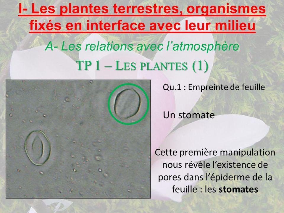 I- Les plantes terrestres, organismes fixés en interface avec leur milieu A- Les relations avec latmosphère Cette première manipulation nous révèle le
