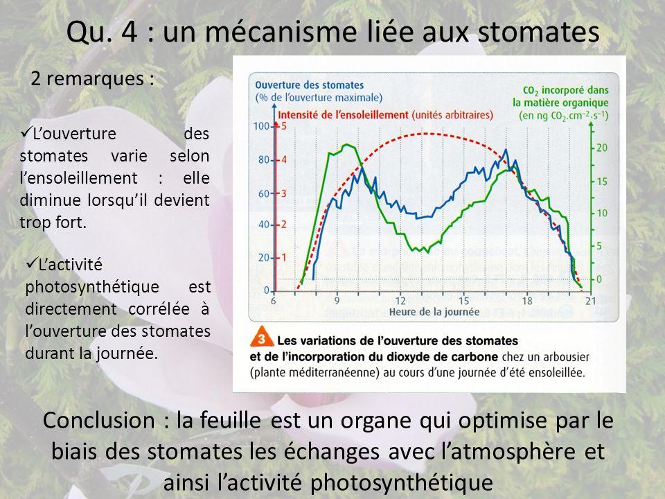 Qu. 4 : un mécanisme liée aux stomates 2 remarques : Louverture des stomates varie selon lensoleillement : elle diminue lorsquil devient trop fort. La