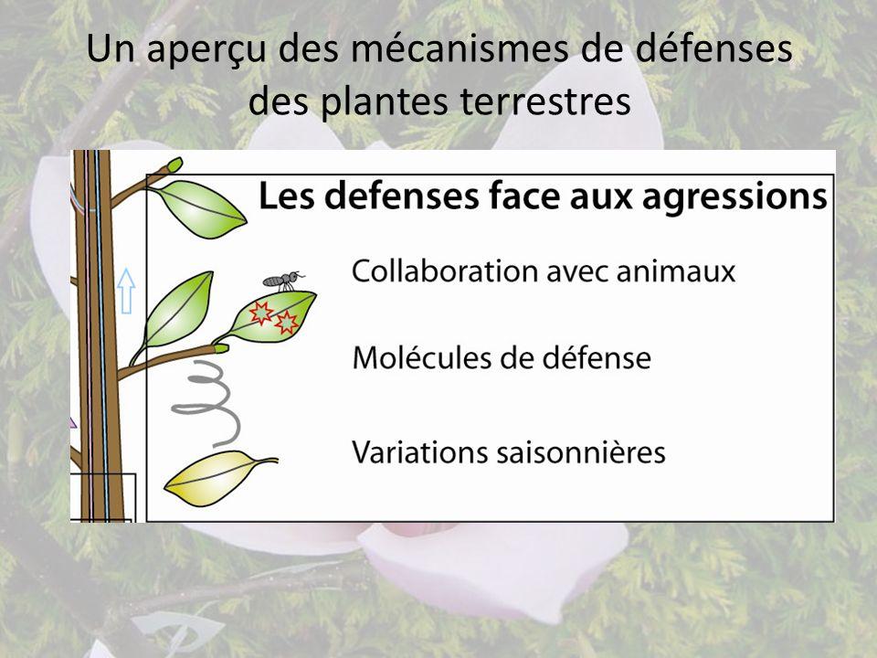 Un aperçu des mécanismes de défenses des plantes terrestres