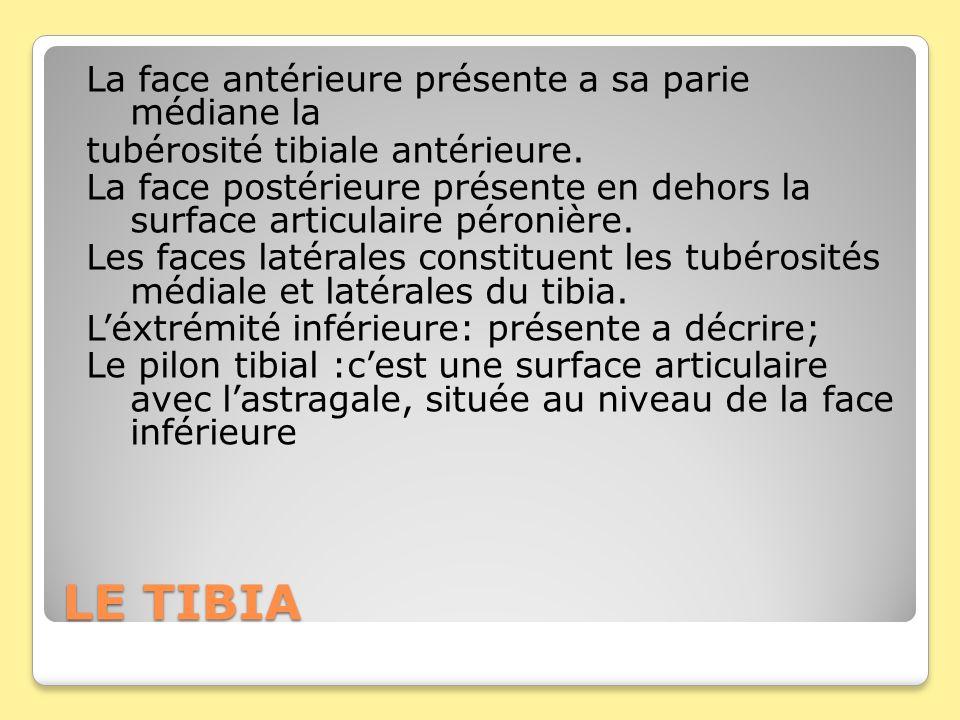 LE TIBIA La face antérieure présente a sa parie médiane la tubérosité tibiale antérieure. La face postérieure présente en dehors la surface articulair