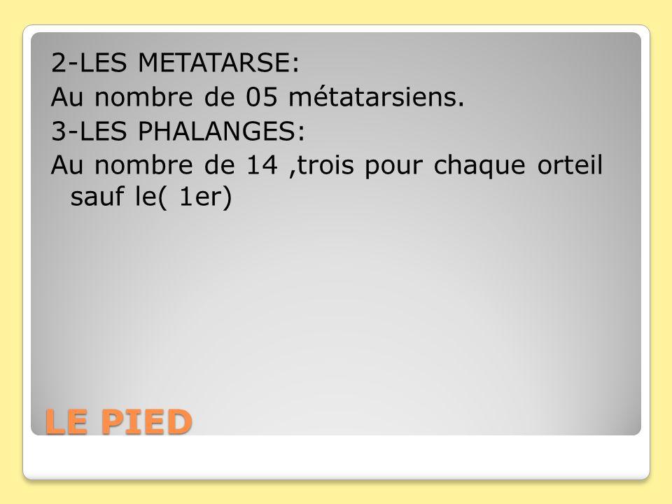 LE PIED 2-LES METATARSE: Au nombre de 05 métatarsiens. 3-LES PHALANGES: Au nombre de 14,trois pour chaque orteil sauf le( 1er)