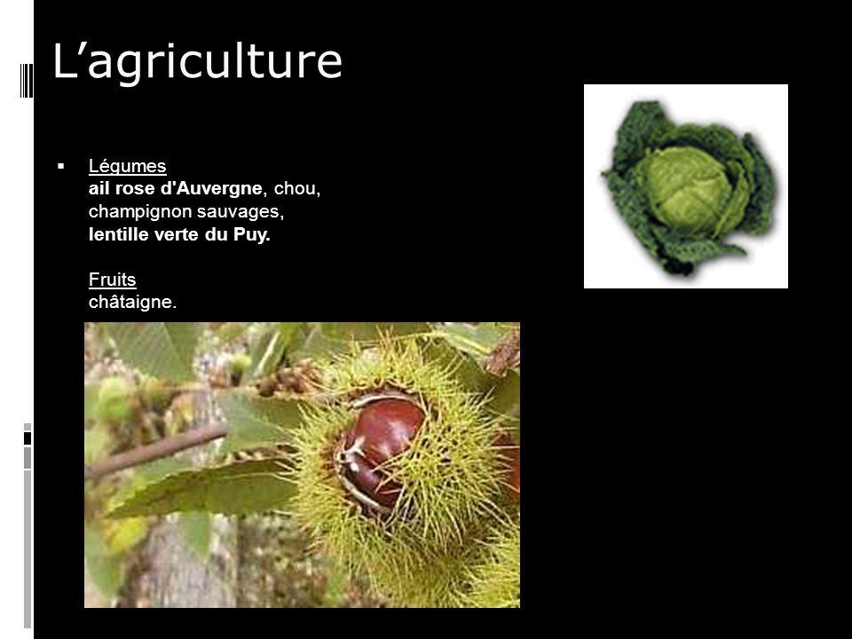 Lagriculture Légumes ail rose d Auvergne, chou, champignon sauvages, lentille verte du Puy.